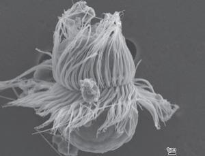 alga pianta animale
