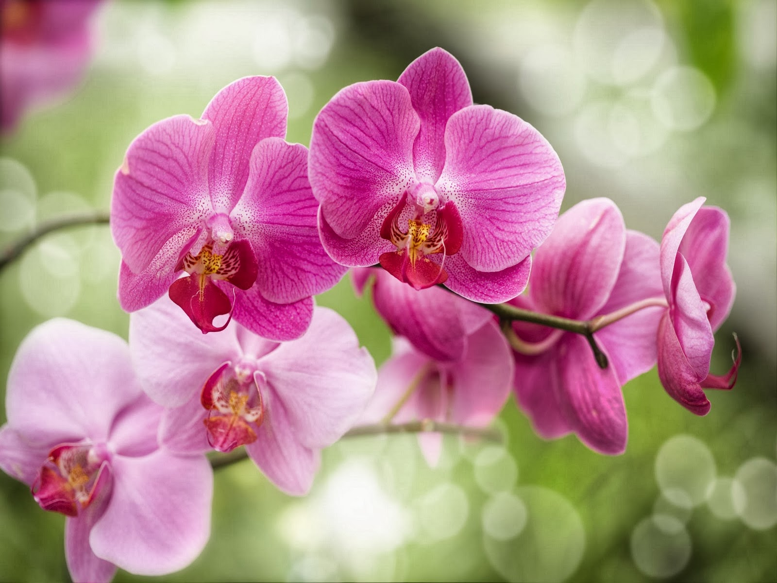 Scienza sseb preziosa e delicata l orchidea - Come curare un orchidea in casa ...