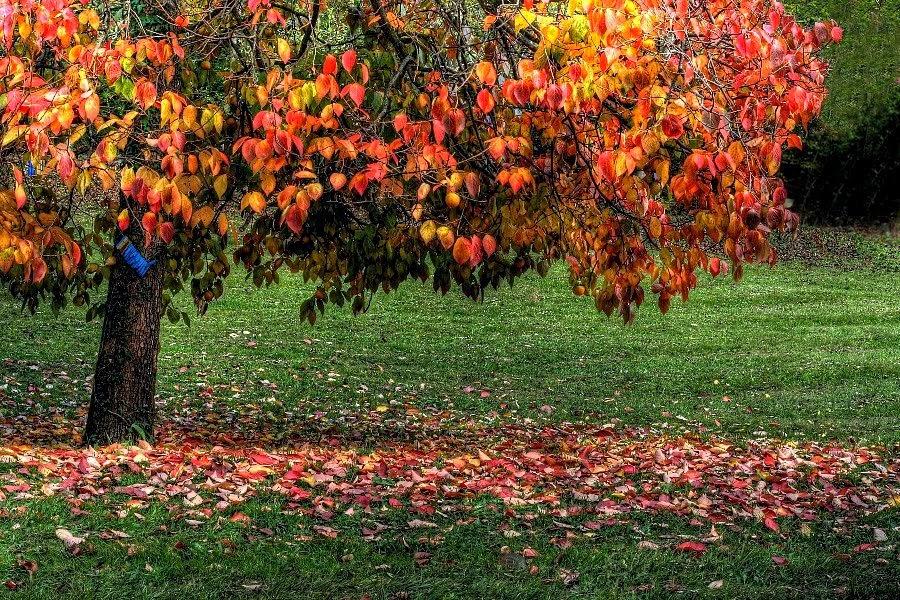 L albero della pace e i suoi frutti pianetablunews for Albero di cachi