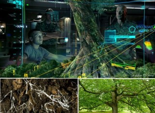 internet-sotterraneo-di-funghi-320x234