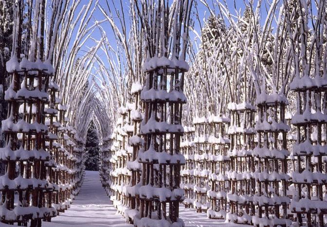 catedral de arboles vivos de Orobie 8