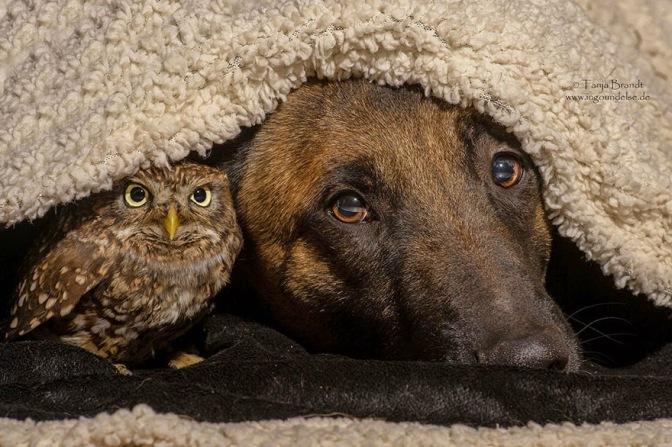 La strana amicizia tra un cane e un gufo