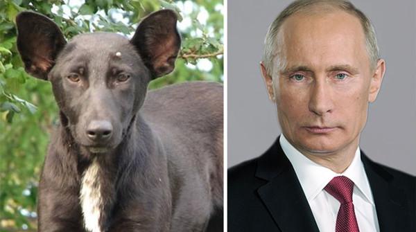 10 cani che sembrano tutt'altro