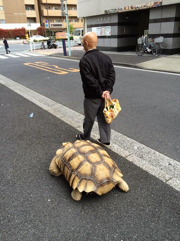 Un vecchio che passeggia con una grande tartaruga per le strade di Tokio