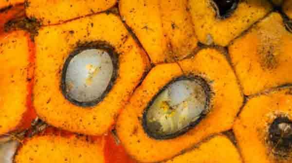 5 cose da sapere sull'olio di palma per non farsi prendere in giro