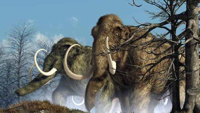 """I mammut lanosi vivevano ancora 4.300 anni fa e potrebbero essere """"resuscitati"""""""