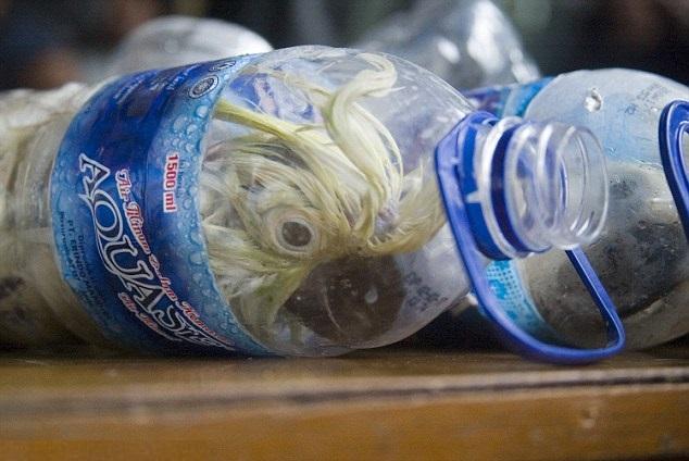 Crudeltà senza confini: salvati 24 pappagallini rinchiusi in bottiglie di plastica