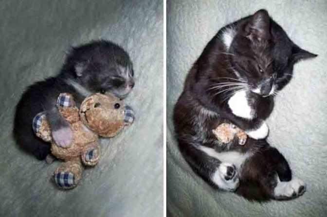 22 foto che mostrano la crescita di animali domestici con i loro giocattoli preferiti