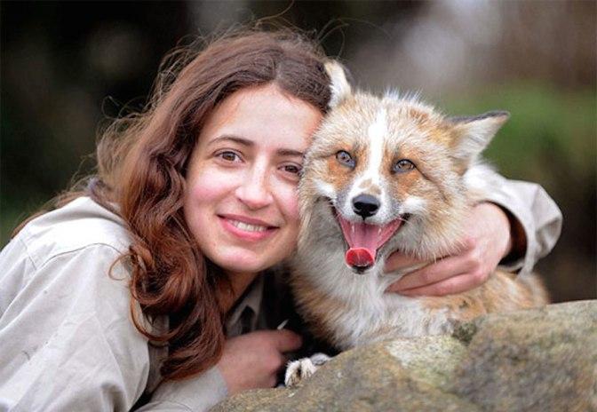 Volpe salvata e allevata dagli esseri umani crede di essere un cane